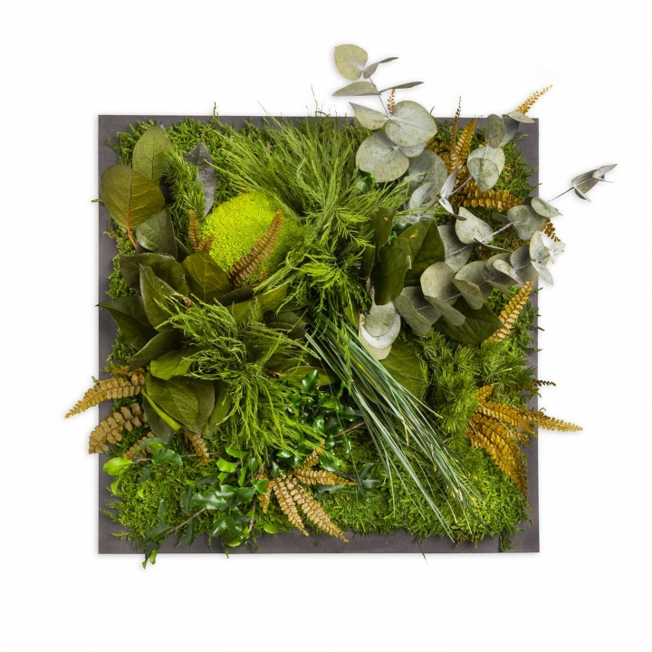 Moosbild ´Dschungel´ 35 x 35 cm auf Holzfaserplatte anthrazit