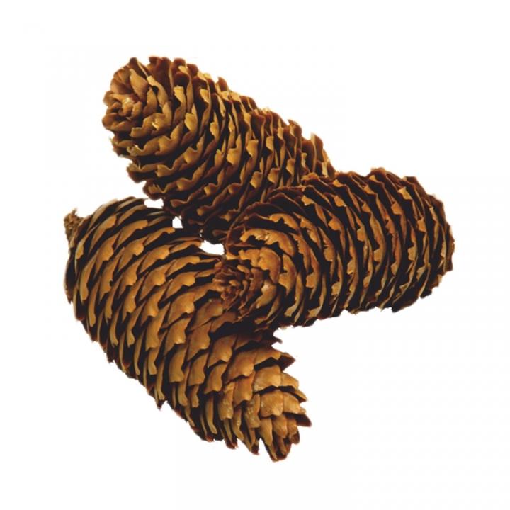 Fichte Zapfen Natur (10 Kg)