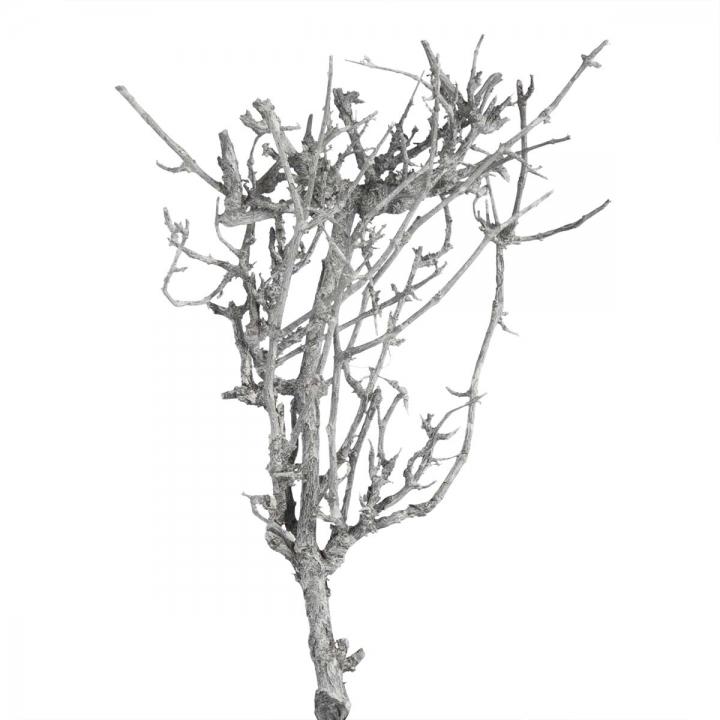 Sortiment Einzelteile in Frosted Blackwashed ( 60 teilig )