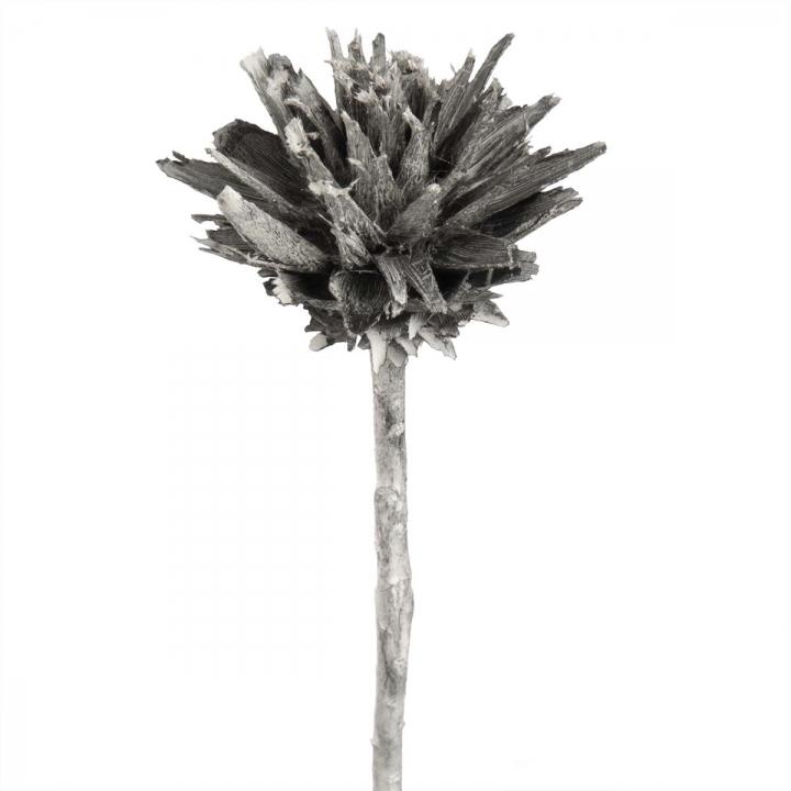Leukospernum mit Stiel in Frosted Blackwashed     (600 Stück)