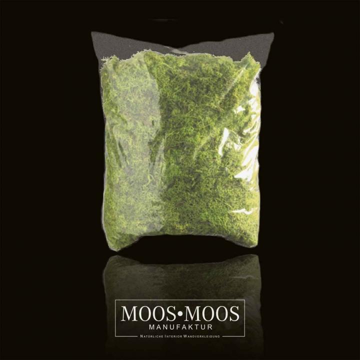 1kg Islandmoos gerupft präpariert und gefärbt ( lichtecht ) in Apfelgrün / Hellgrün