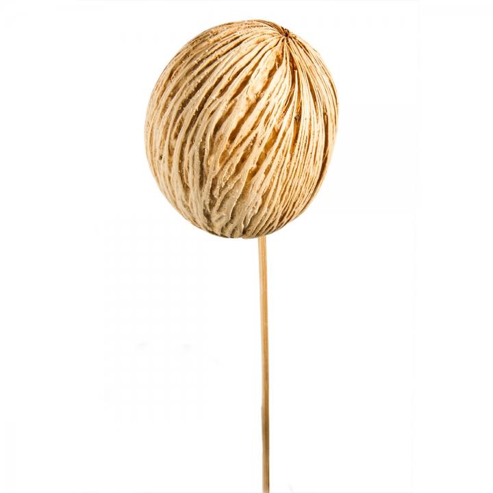 Mintolla Ball am Stab in Gebleicht      (250 Stück)