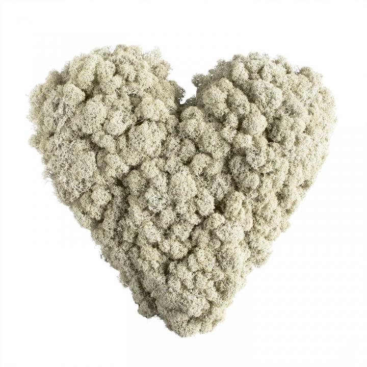 25`er Herz Moosteil mit verottbarer Unterlage (18 Stück)