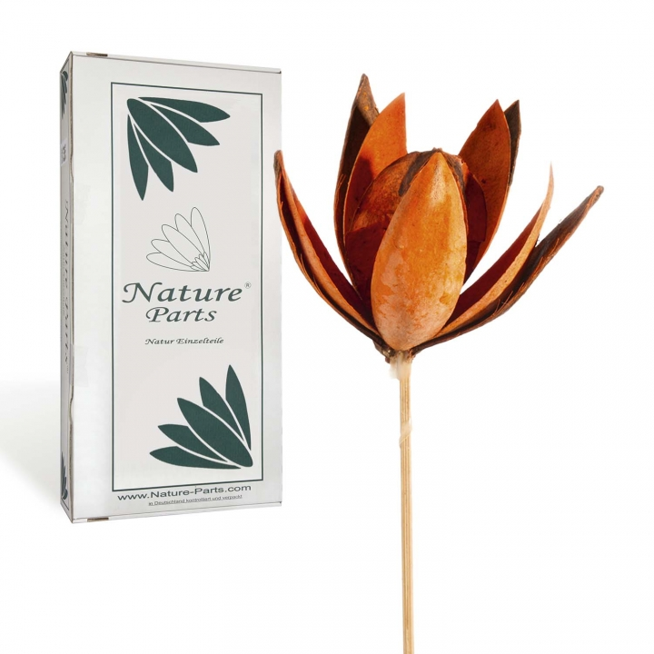 Wildlilie am Stiel in Orange ( 50 Stück )