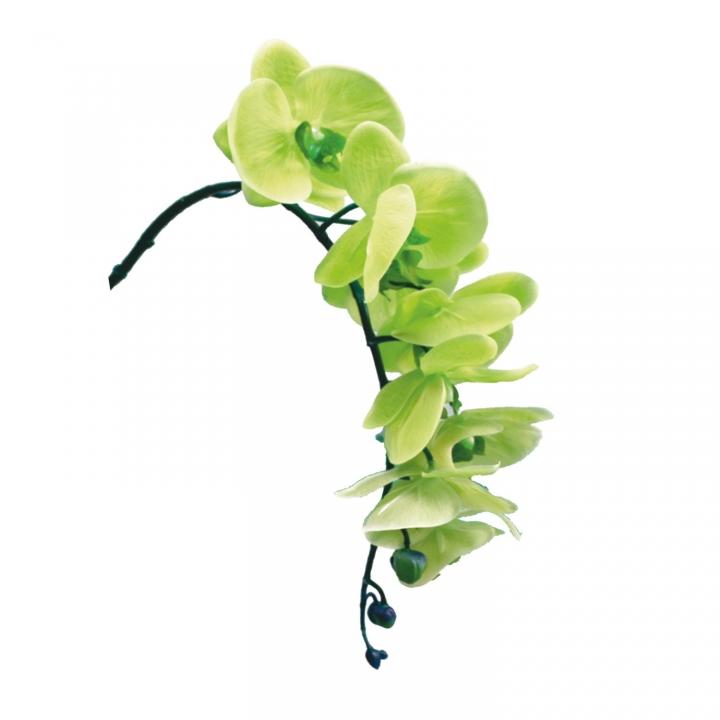 Orchideen Zweig gummiert in grün ( ca. 65cm ) (6 Stück)