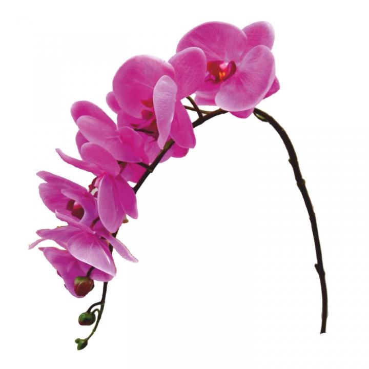 Orchideen Zweig gummiert in lila ( ca. 65cm ) (12 Stück)