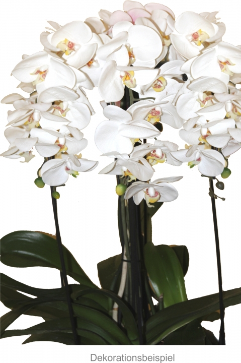 Orchideen Blatt