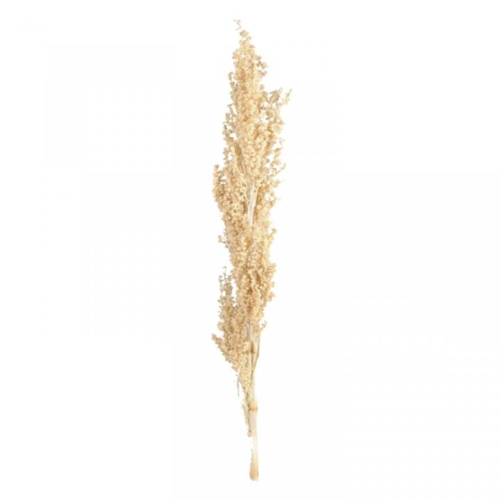 Palmiet Vlei Zweig in Gebleicht   (30 Stück)