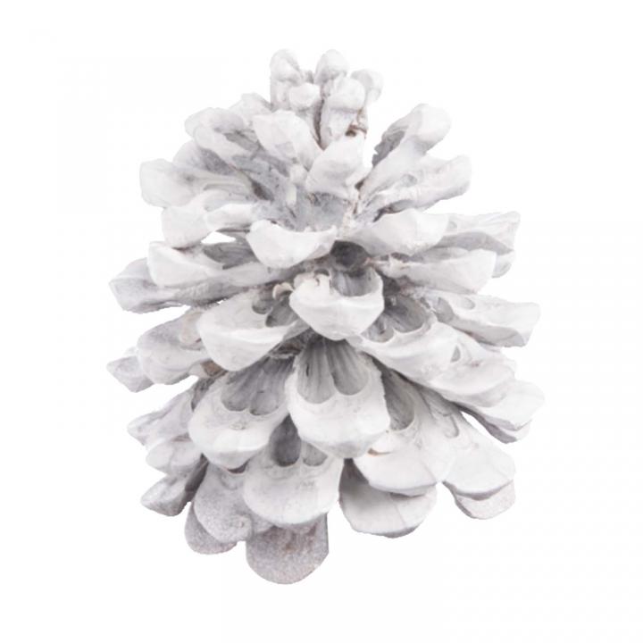 Pinea Zapfen Mittel Stonewashed ( 15 Stück )