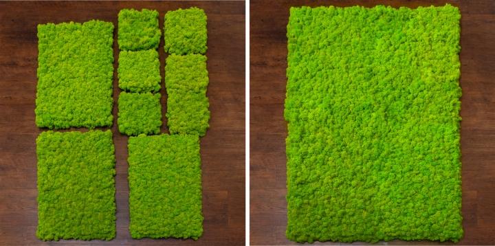 Moos•Moos Islandmoos Organic Moosbild ´Amalia´ (25x25cm) in Mandarine – Moosplatte – einzigartiges Gefühl trifft auf besonderes haptisches Gefühl