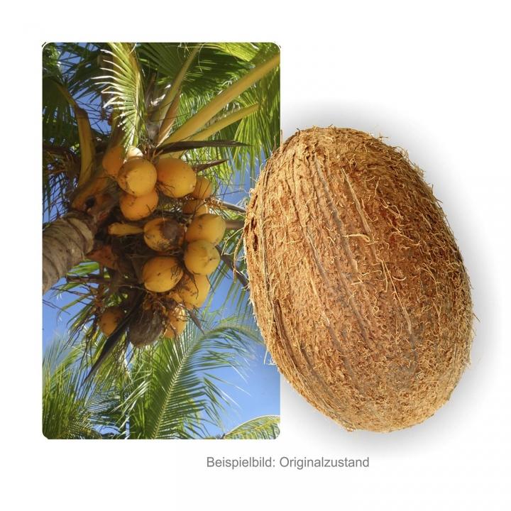 Kokosnuss halbiert lackiert ( ca. Ø 23 x 14cm, Öffnung Ø 8-10cm )