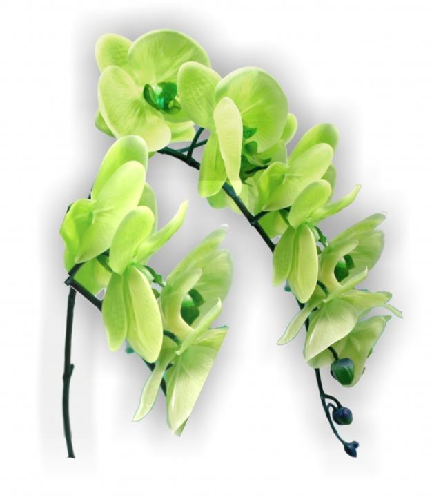 Orchideen Zweig gummiert in grün ( ca. 65cm )