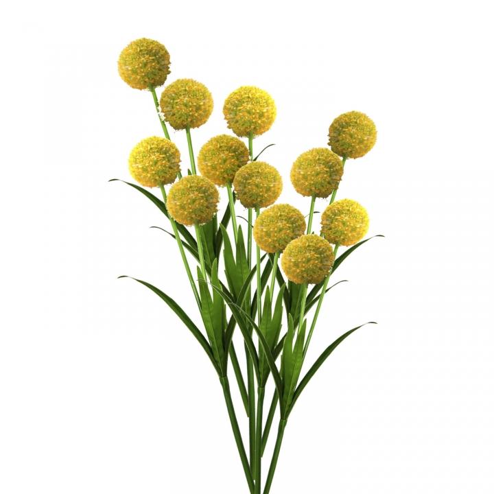 Allium / Zierlauch mit Stiel in Gelb ( Kopfgröße ca. 10cm )