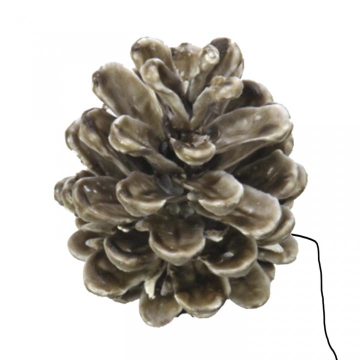 Schwarzkiefer Zapfen am Draht gewachst in Mocca Grey ( 50 Stück )