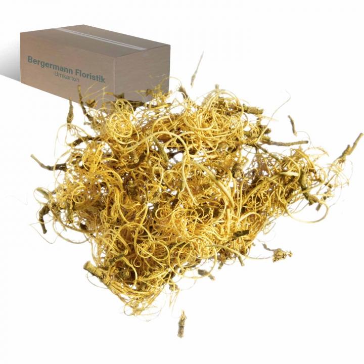 Curly Moos in Yellowspring ( 8kg )       (8 Kg)
