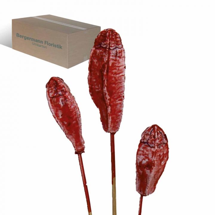 Mehogany am Stiel gewachst in Rot Antik (500 Stück)