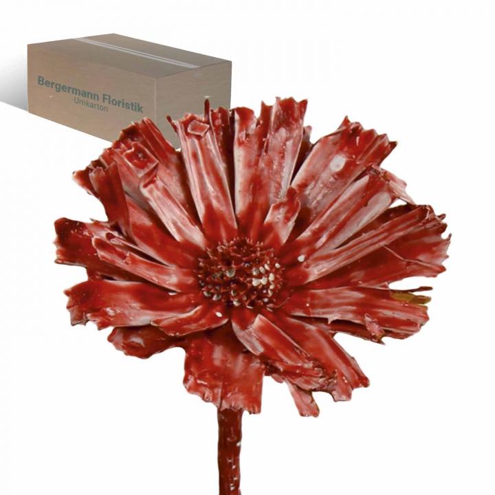 Protea geschnitten gewachst rot antik (350 Stück)