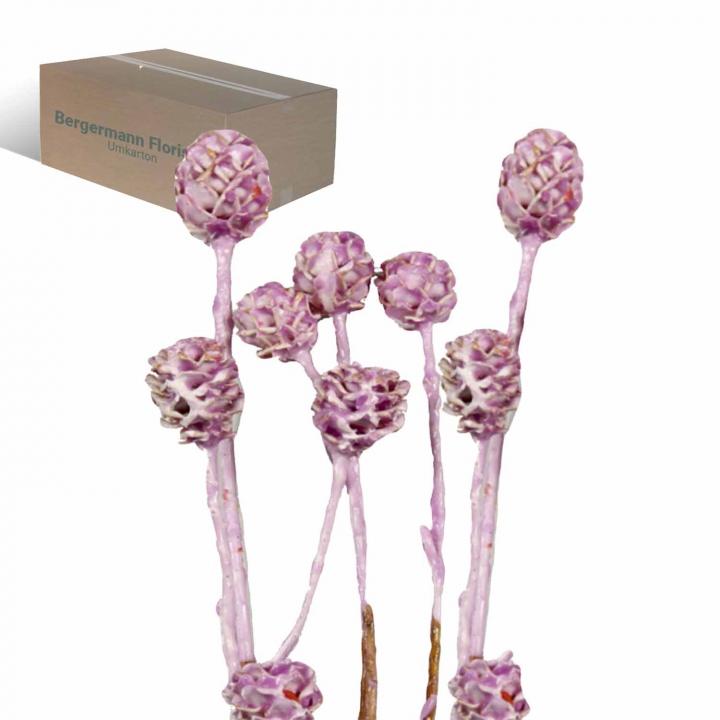 Strictum gewachst viola ice (200 Stück)