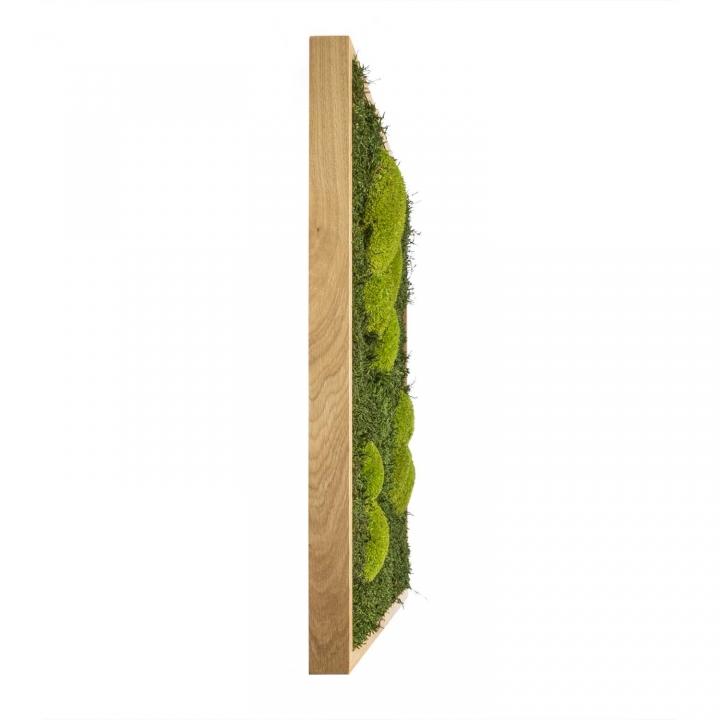 Moosbild Waldmoos & Kugelmoos 80 x 80 cm mit Tischlerrahmen aus geölter Eiche