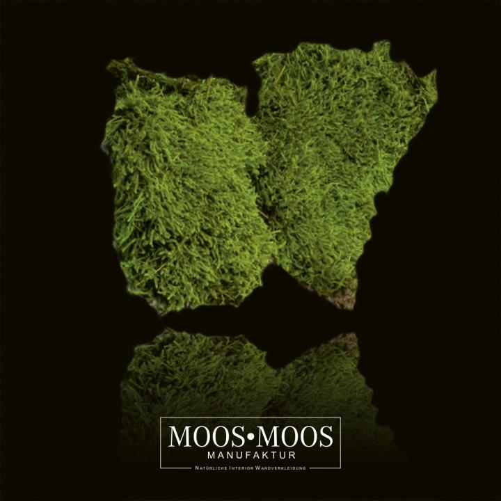 1 m² Plattenmoos / Waldmoos präpariert und gefärbt ( lichtecht ) in Apfelgrün / Hellgrün