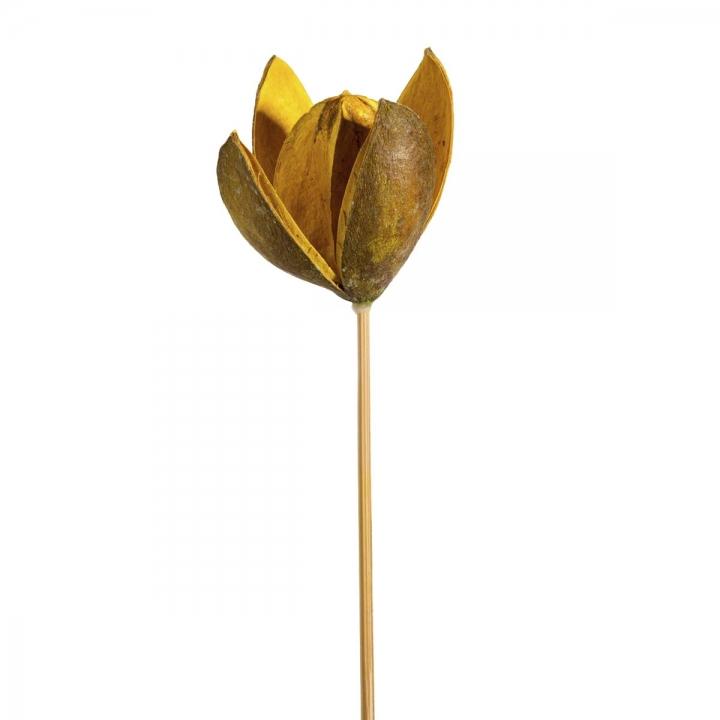 Sortiment Wildlilie am Stiel 3fach Farbmix ( 50 Stück )