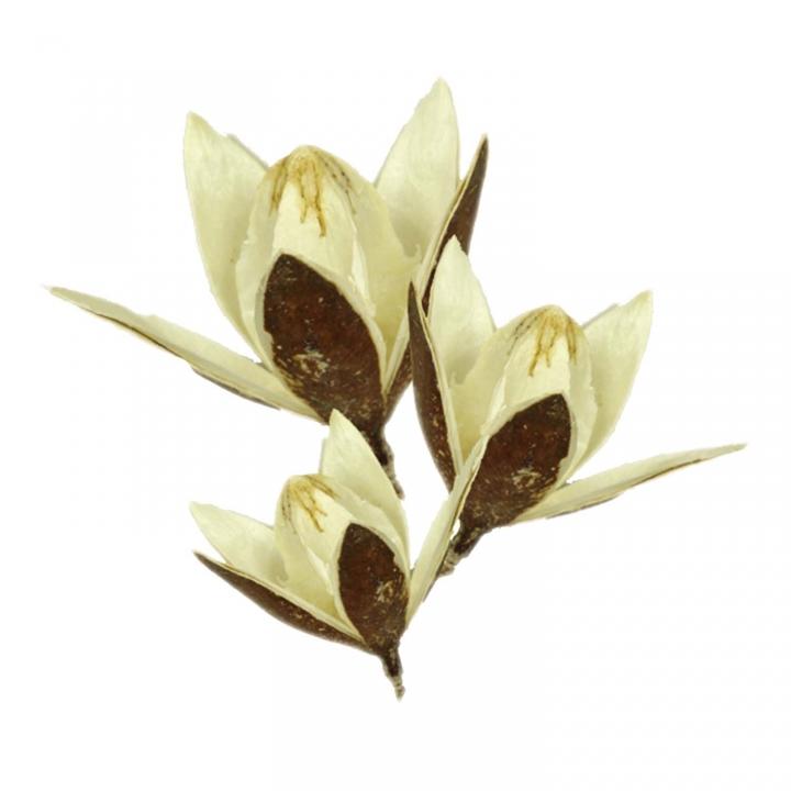 Wildlilie am Stiel in Gebleicht ( 50 Stück )