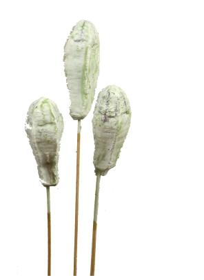 Mehogany am Stiel gewachst in Grün Light     (500 Stück)