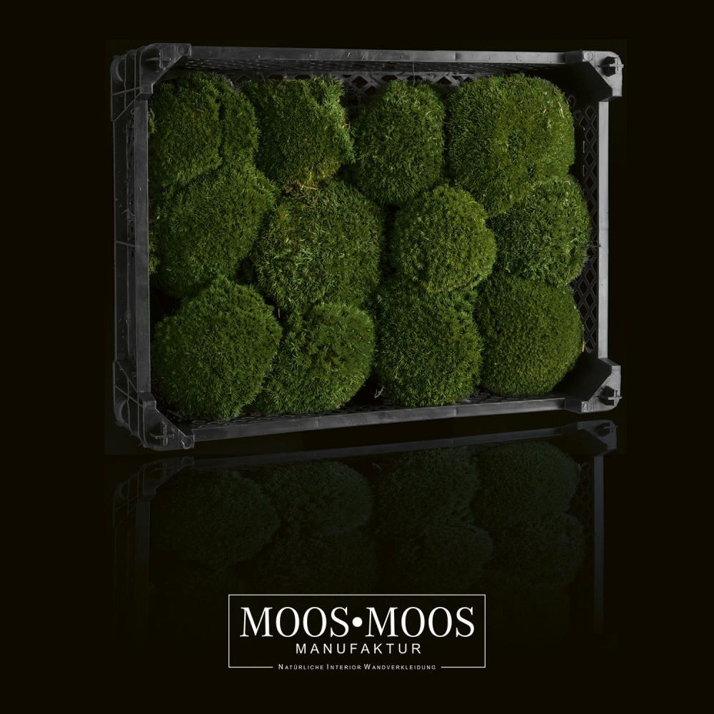 DauerFloristik Polstermoos Bollenmoos Ballmoos Kugelmoos konserviert dunkelgr/ün gr/ün 38 x 58 cm ca. 0,2 qm