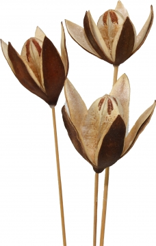 Wildlilie am Stiel in Natur (400 Stück)