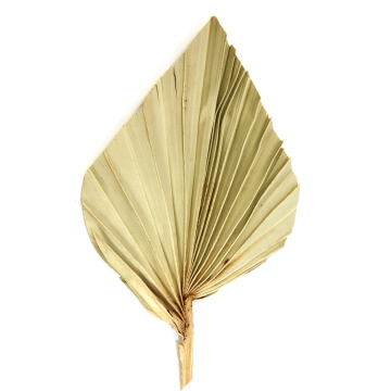 Palm Spear mit Stiel mini in Natur  (900 Stück)