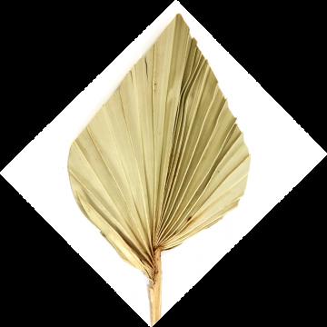 Palm Spear mit  Stiel medium in Natur