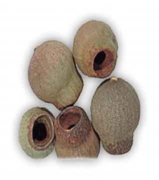 Gumbells lose in Natur  (25 Kg)