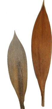 Cocosschale Kokosblatt in Natur, ca. 30cm lang  (10 Kg)