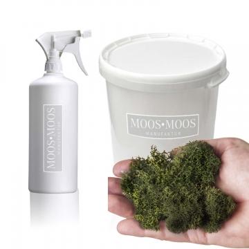 Moos•Moos lichtechte Farbe inklusive Präparation in Moosgrün