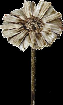 Protea geschnitten gewachst mocca grey (350 St