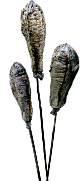 Mehogany am Stiel gewachst mocca grey (500 Stück)
