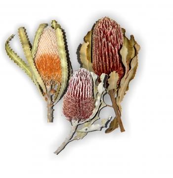 Banksia 3fach Mix mit Stiel   (90 Stück)