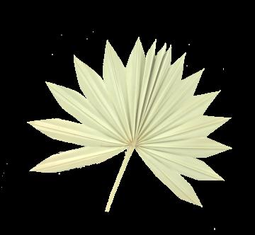 Sun Palm Cut mit  Stiel in Orange (30 Stück)