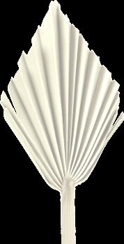 Palm Spear mit  Stiel medium in Gebleicht (50 Stück)