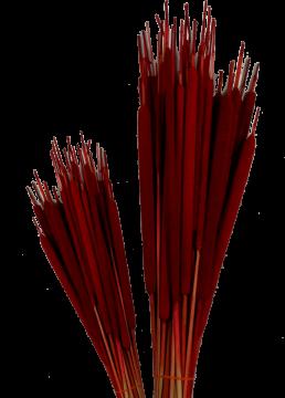Schilfkolben medium in Rot (2000 Stück)