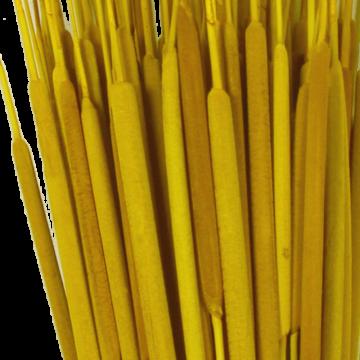 Schilfkolben medium in Gelb (2000 Stück)