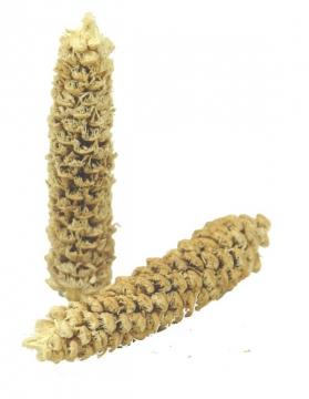 Fichte Zapfen Gebleicht geraspelt (10 Kg)