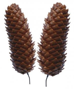 Fichte Zapfen Natur am Draht gewachst (250 Stück)