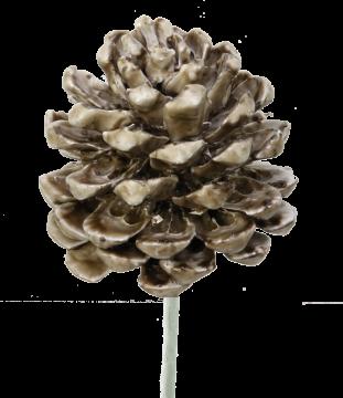 Pinea Zapfen am Stab gewachst mocca grey (75 Stück)