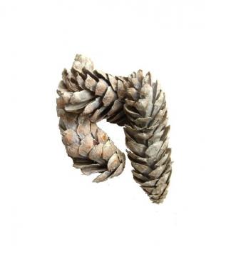 Strobus Zapfen Ø 10-15cm Stonewashed (500 St