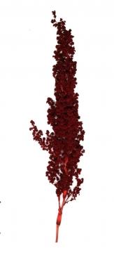 Palmiet Vlei rot (30 Stück)