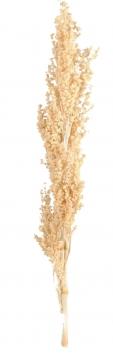 Palmiet Vlei gebleicht (30 Stück)