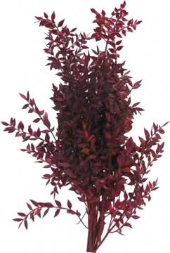 Ruskus Zweig gefärbt in Rot    (10 Kg)