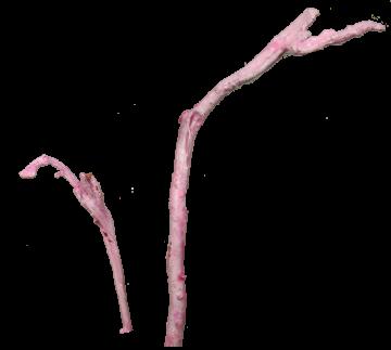 Natraj mini gewachst viola ice (500 Stück)