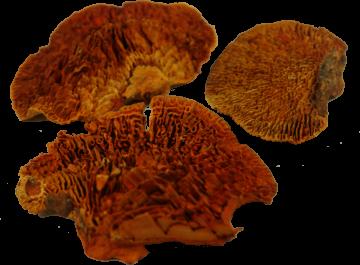 Baumschwamm lose in Orange gefärbt    (10 Kg)